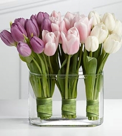 30 Tulips in a Vase