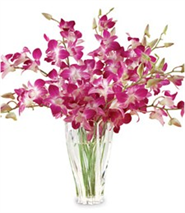 12 orchids