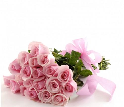 Soft pink Titanic Roses