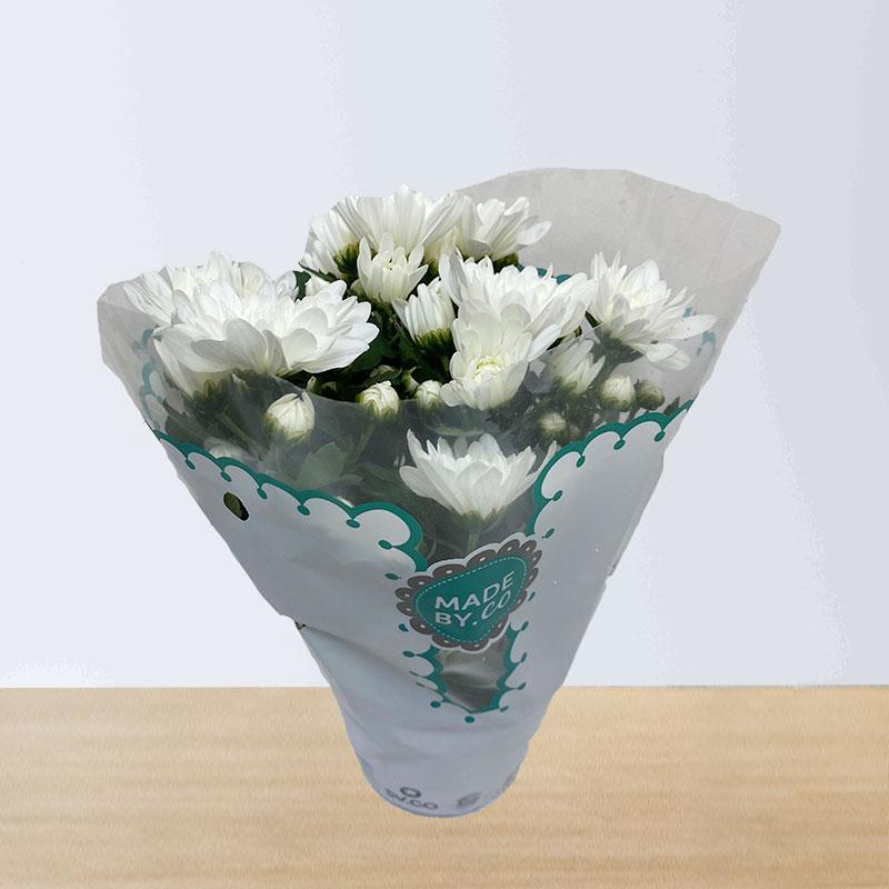 White Chrysanthemums Plant