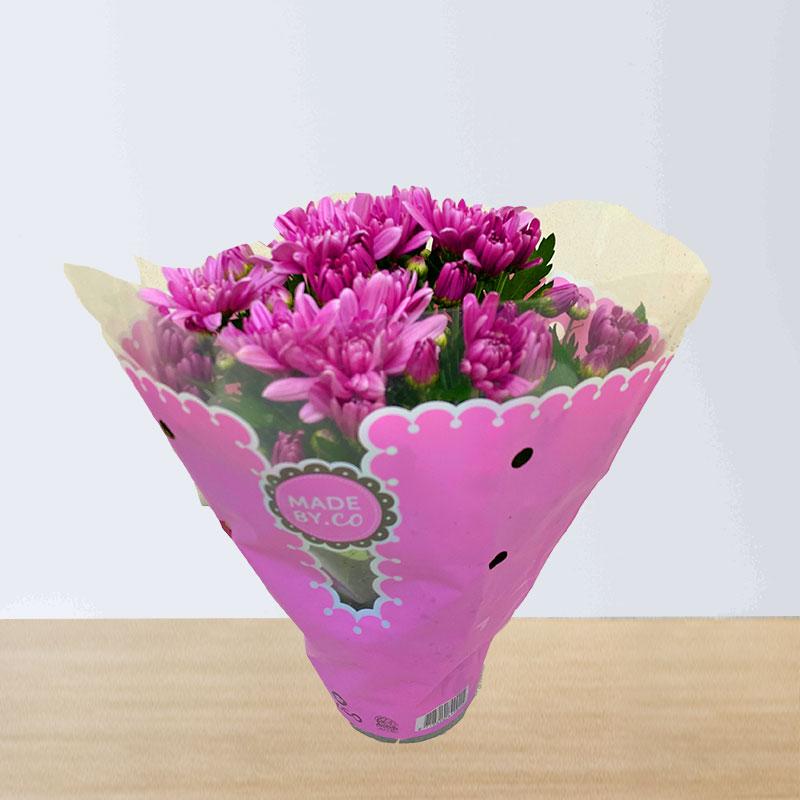 Pink Chrysanthemums Plant
