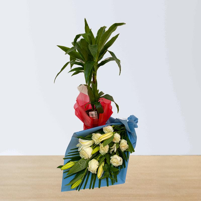 Dracaena Rikki Plant and Flowers Combo
