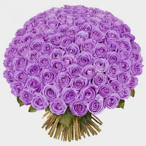 100 Purple Kisses