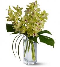 Orchid-Elegance