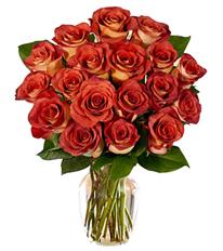 Sun Kiss Roses