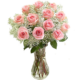 Pink Roses with Gypsophelia